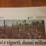 3 maggio - Kiwi e vigneti, danni milionari